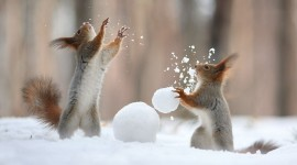 Squirrel Snow Wallpaper For Desktop