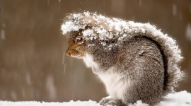 Squirrel Snow Wallpaper For PC