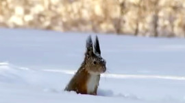 Squirrel Snow Wallpaper Full HD