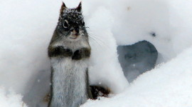 Squirrel Snow Wallpaper Gallery