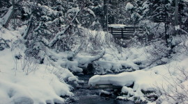Stream The Snow Photo Free