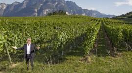 Winery In Italy Desktop Wallpaper For PC