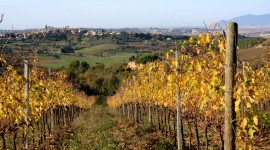 Winery In Italy High Quality Wallpaper