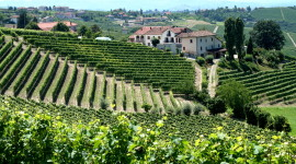 Winery In Italy Wallpaper Download