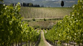 Winery In Italy Wallpaper For Desktop