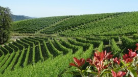 Winery In Italy Wallpaper For PC