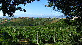 Winery In Italy Wallpaper HD