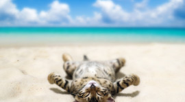 Animals Beaches Wallpaper