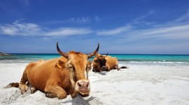 Animals Beaches Wallpaper Gallery