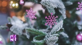 Colorful Snowflakes Photo