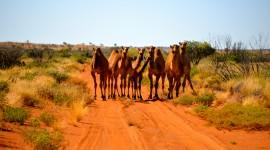 Deserts In Australia Wallpaper For Desktop