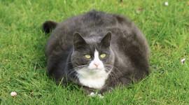 Fat Cat Photo