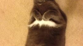 Fat Cat Wallpaper For IPhone