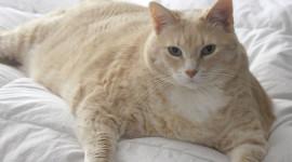 Fat Cat Wallpaper Gallery