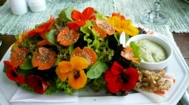Food From Flowers Image Download