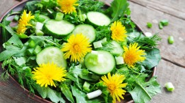 Food From Flowers Photo Download