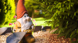 Forest Gnomes Photo Download