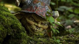 Forest Gnomes Photo Free