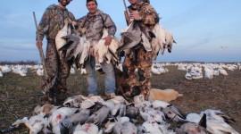 Hunt Snow Geese Desktop Wallpaper