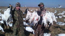 Hunt Snow Geese Photo Free