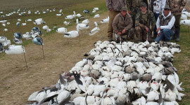 Hunt Snow Geese Picture Download