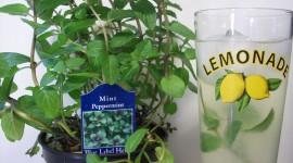 Peppermint Lemonade Wallpaper Background