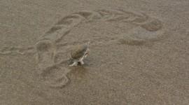 Sand Fleas Wallpaper For Desktop