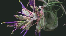 Tillandsia Aircraft Picture