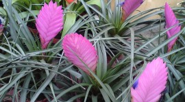 Tillandsia Wallpaper For Desktop