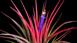 Tillandsia Wallpaper For IPhone