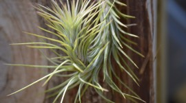 Tillandsia Wallpaper Gallery