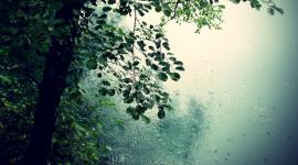 Tree Rain Photo