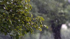 Tree Rain Photo Free