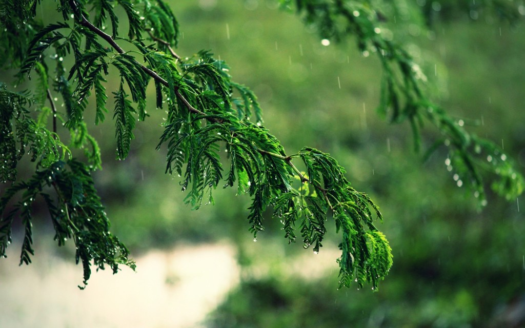 Tree Rain wallpapers HD