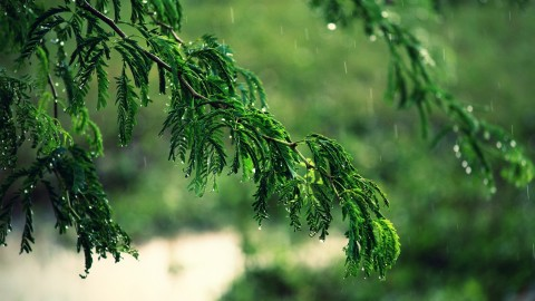 Tree Rain wallpapers high quality