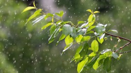 Tree Rain Wallpaper Free