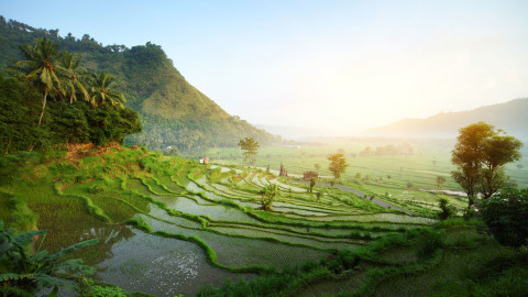 Ubud wallpapers high quality