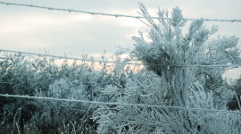 Wire Ice Winter Wallpaper For PC