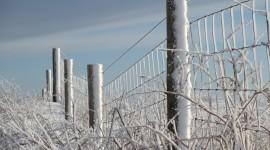 Wire Ice Winter Wallpaper Full HD
