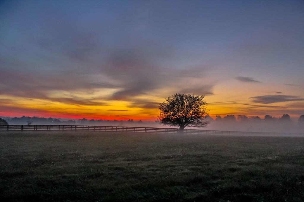 4K Dawn Field wallpapers HD