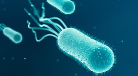 Bacteria In A Petri Dish Wallpaper Background