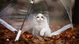 Cat Umbrella Photo