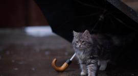 Cat Umbrella Photo Download