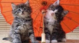 Cat Umbrella Wallpaper For Desktop