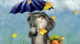 Cat Umbrella Wallpaper For PC