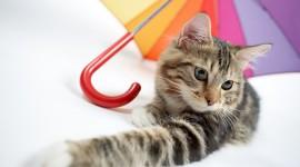 Cat Umbrella Wallpaper Free