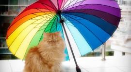 Cat Umbrella Wallpaper Full HD
