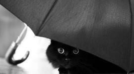 Cat Umbrella Wallpaper Gallery