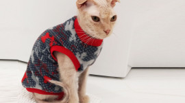Clothing For Cats Aircraft Picture