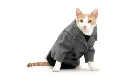 Clothing For Cats Desktop Wallpaper